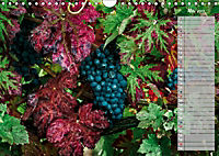 Rheingau - Spätburgunder Trauben (Wandkalender 2019 DIN A4 quer) - Produktdetailbild 5