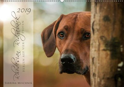Rhodesian Ridgeback - Herzen auf vier Pfoten (Wandkalender 2019 DIN A2 quer), Sabrina Mischnik