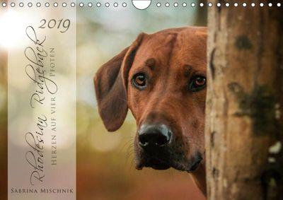 Rhodesian Ridgeback - Herzen auf vier Pfoten (Wandkalender 2019 DIN A4 quer), Sabrina Mischnik