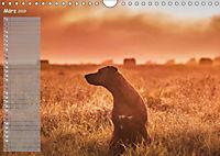 Rhodesian Ridgeback - Herzen auf vier Pfoten (Wandkalender 2019 DIN A4 quer) - Produktdetailbild 3