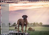 Rhodesian Ridgeback - Herzen auf vier Pfoten (Tischkalender 2019 DIN A5 quer) - Produktdetailbild 1
