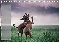 Rhodesian Ridgeback - Herzen auf vier Pfoten (Tischkalender 2019 DIN A5 quer) - Produktdetailbild 6