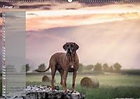 Rhodesian Ridgeback - Herzen auf vier Pfoten (Wandkalender 2019 DIN A2 quer) - Produktdetailbild 1