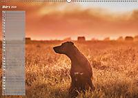 Rhodesian Ridgeback - Herzen auf vier Pfoten (Wandkalender 2019 DIN A2 quer) - Produktdetailbild 3