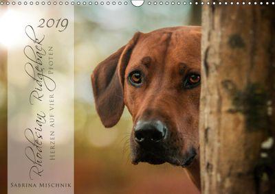 Rhodesian Ridgeback - Herzen auf vier Pfoten (Wandkalender 2019 DIN A3 quer), Sabrina Mischnik