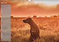 Rhodesian Ridgeback - Herzen auf vier Pfoten (Wandkalender 2019 DIN A3 quer) - Produktdetailbild 3