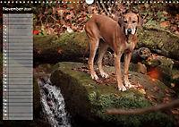Rhodesian Ridgeback - Herzen auf vier Pfoten (Wandkalender 2019 DIN A3 quer) - Produktdetailbild 11
