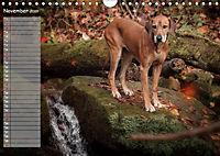 Rhodesian Ridgeback - Herzen auf vier Pfoten (Wandkalender 2019 DIN A4 quer) - Produktdetailbild 11