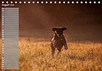 Rhodesian Ridgeback - Herzen auf vier Pfoten (Tischkalender 2019 DIN A5 quer) - Produktdetailbild 8
