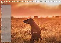 Rhodesian Ridgeback - Herzen auf vier Pfoten (Tischkalender 2019 DIN A5 quer) - Produktdetailbild 3