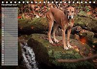 Rhodesian Ridgeback - Herzen auf vier Pfoten (Tischkalender 2019 DIN A5 quer) - Produktdetailbild 11