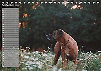 Rhodesian Ridgeback - Herzen auf vier Pfoten (Tischkalender 2019 DIN A5 quer) - Produktdetailbild 9