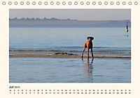 Rhodesian Ridgeback Power aus Südafrika (Tischkalender 2019 DIN A5 quer) - Produktdetailbild 2