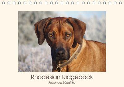 Rhodesian Ridgeback Power aus Südafrika (Tischkalender 2019 DIN A5 quer), Birgit Bodsch