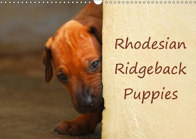 Rhodesian Ridgeback Puppies (Wall Calendar 2019 DIN A3 Landscape), Anke van Wyk