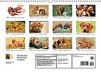 Rhodesian Ridgeback Puppies (Wall Calendar 2019 DIN A3 Landscape) - Produktdetailbild 1