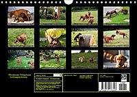 Rhodesian Ridgeback - Schnappschüsse - (Wandkalender 2019 DIN A4 quer) - Produktdetailbild 13