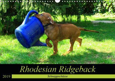 Rhodesian Ridgeback - Schnappschüsse - (Wandkalender 2019 DIN A3 quer), Dagmar Behrens