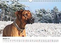 Ridgebacks - Hunde aus Afrika (Wandkalender 2019 DIN A4 quer) - Produktdetailbild 1