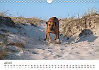 Ridgebacks - Hunde aus Afrika (Wandkalender 2019 DIN A4 quer) - Produktdetailbild 7