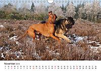Ridgebacks - Hunde aus Afrika (Wandkalender 2019 DIN A4 quer) - Produktdetailbild 11