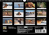 Ridgebacks - Hunde aus Afrika (Wandkalender 2019 DIN A4 quer) - Produktdetailbild 13