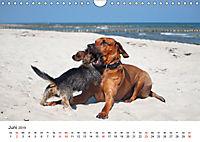 Ridgebacks - Hunde aus Afrika (Wandkalender 2019 DIN A4 quer) - Produktdetailbild 6