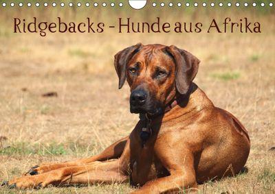 Ridgebacks - Hunde aus Afrika (Wandkalender 2019 DIN A4 quer), Birgit Bodsch