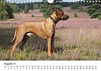 Ridgebacks - Hunde aus Afrika (Wandkalender 2019 DIN A4 quer) - Produktdetailbild 8