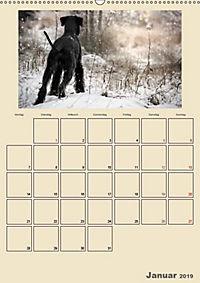 Riesenschnauzer - Riesen mit Herz und Seele (Wandkalender 2019 DIN A2 hoch) - Produktdetailbild 1