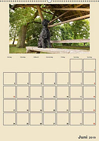 Riesenschnauzer - Riesen mit Herz und Seele (Wandkalender 2019 DIN A2 hoch) - Produktdetailbild 2