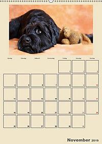 Riesenschnauzer - Riesen mit Herz und Seele (Wandkalender 2019 DIN A2 hoch) - Produktdetailbild 10