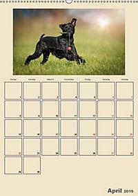 Riesenschnauzer - Riesen mit Herz und Seele (Wandkalender 2019 DIN A2 hoch) - Produktdetailbild 4