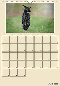 Riesenschnauzer - Riesen mit Herz und Seele (Wandkalender 2019 DIN A4 hoch) - Produktdetailbild 7