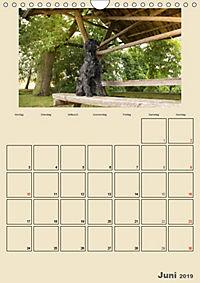 Riesenschnauzer - Riesen mit Herz und Seele (Wandkalender 2019 DIN A4 hoch) - Produktdetailbild 6
