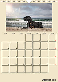 Riesenschnauzer - Riesen mit Herz und Seele (Wandkalender 2019 DIN A4 hoch) - Produktdetailbild 8