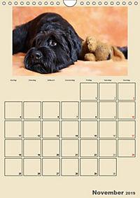 Riesenschnauzer - Riesen mit Herz und Seele (Wandkalender 2019 DIN A4 hoch) - Produktdetailbild 11