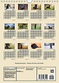 Riesenschnauzer - Riesen mit Herz und Seele (Wandkalender 2019 DIN A4 hoch) - Produktdetailbild 13