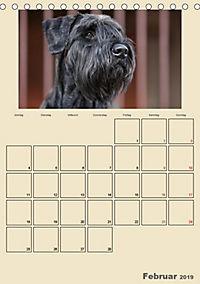 Riesenschnauzer - Riesen mit Herz und Seele (Tischkalender 2019 DIN A5 hoch) - Produktdetailbild 2