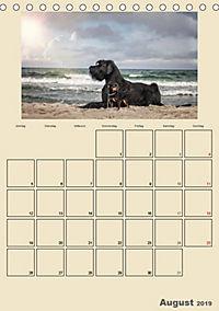 Riesenschnauzer - Riesen mit Herz und Seele (Tischkalender 2019 DIN A5 hoch) - Produktdetailbild 8
