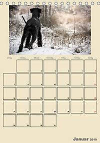 Riesenschnauzer - Riesen mit Herz und Seele (Tischkalender 2019 DIN A5 hoch) - Produktdetailbild 1