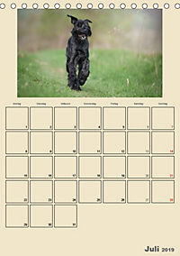 Riesenschnauzer - Riesen mit Herz und Seele (Tischkalender 2019 DIN A5 hoch) - Produktdetailbild 7