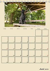 Riesenschnauzer - Riesen mit Herz und Seele (Tischkalender 2019 DIN A5 hoch) - Produktdetailbild 6
