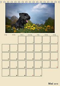 Riesenschnauzer - Riesen mit Herz und Seele (Tischkalender 2019 DIN A5 hoch) - Produktdetailbild 5