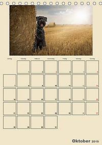 Riesenschnauzer - Riesen mit Herz und Seele (Tischkalender 2019 DIN A5 hoch) - Produktdetailbild 10