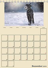 Riesenschnauzer - Riesen mit Herz und Seele (Tischkalender 2019 DIN A5 hoch) - Produktdetailbild 12