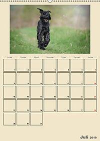 Riesenschnauzer - Riesen mit Herz und Seele (Wandkalender 2019 DIN A2 hoch) - Produktdetailbild 7