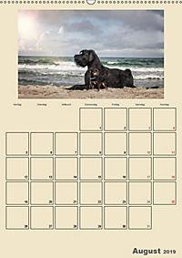 Riesenschnauzer - Riesen mit Herz und Seele (Wandkalender 2019 DIN A2 hoch) - Produktdetailbild 8
