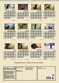 Riesenschnauzer - Riesen mit Herz und Seele (Wandkalender 2019 DIN A2 hoch) - Produktdetailbild 13
