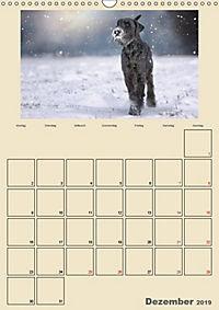 Riesenschnauzer - Riesen mit Herz und Seele (Wandkalender 2019 DIN A3 hoch) - Produktdetailbild 12